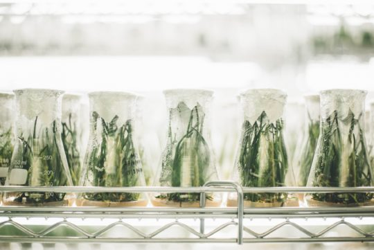 A picture of test tube jars containing plant samples